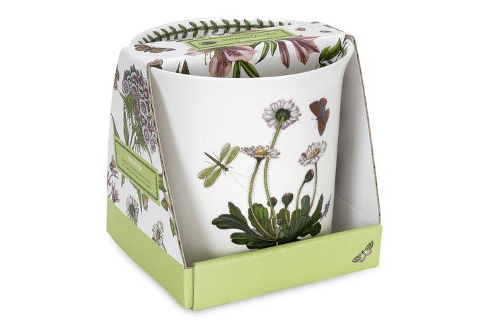 Portmeirion Botanic Garden Planter Orchid Pot