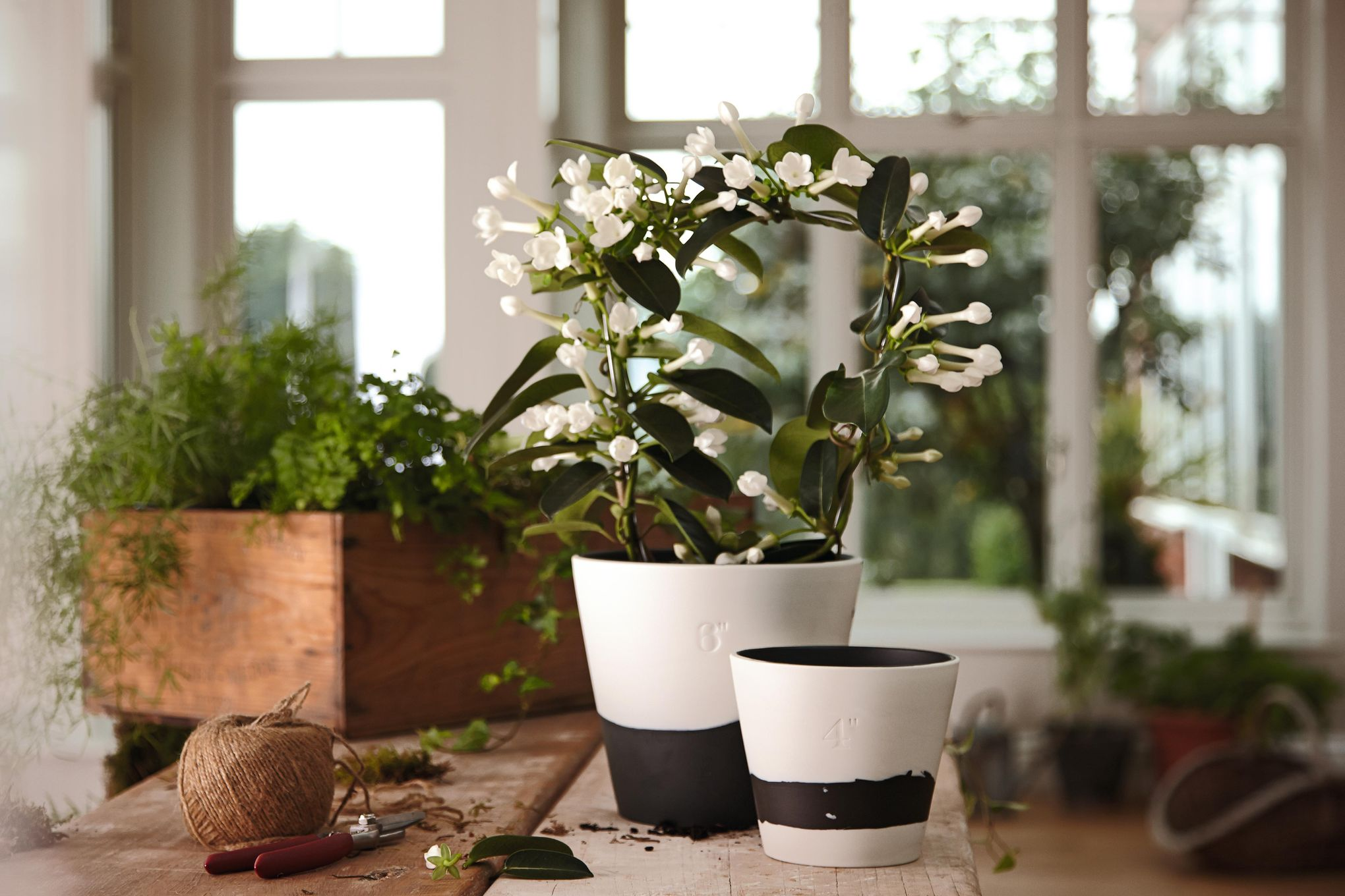 "Wedgwood Burlington Pots Planter Black 4"" thumb 3"