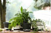 "Wedgwood Burlington Pots Planter Black 5"" thumb 3"