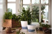 "Wedgwood Burlington Pots Planter Blue 4"" thumb 3"