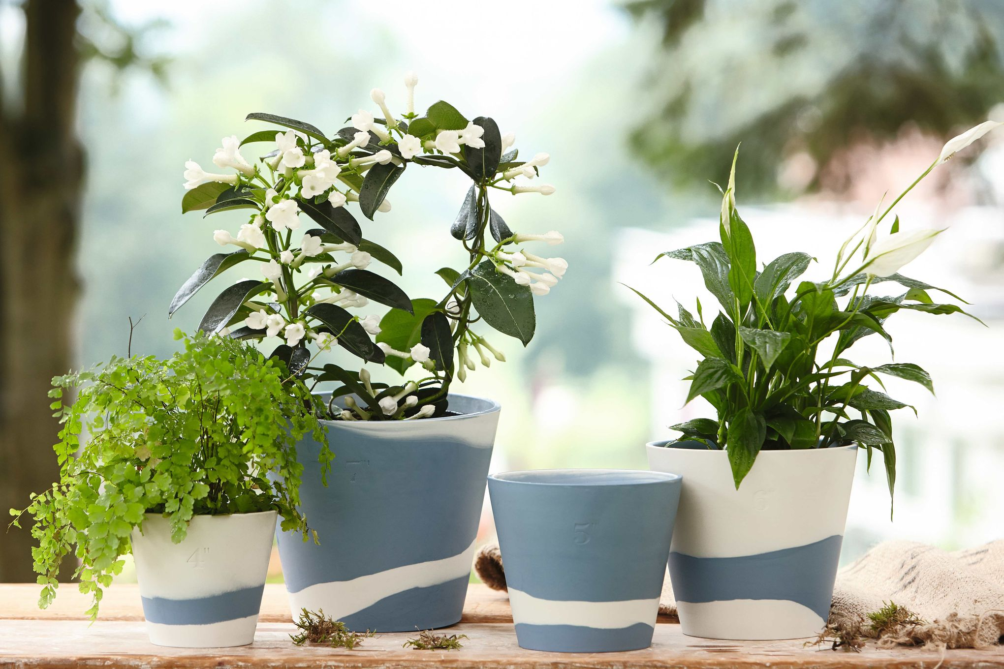 "Wedgwood Burlington Pots Planter Blue 5"" thumb 3"
