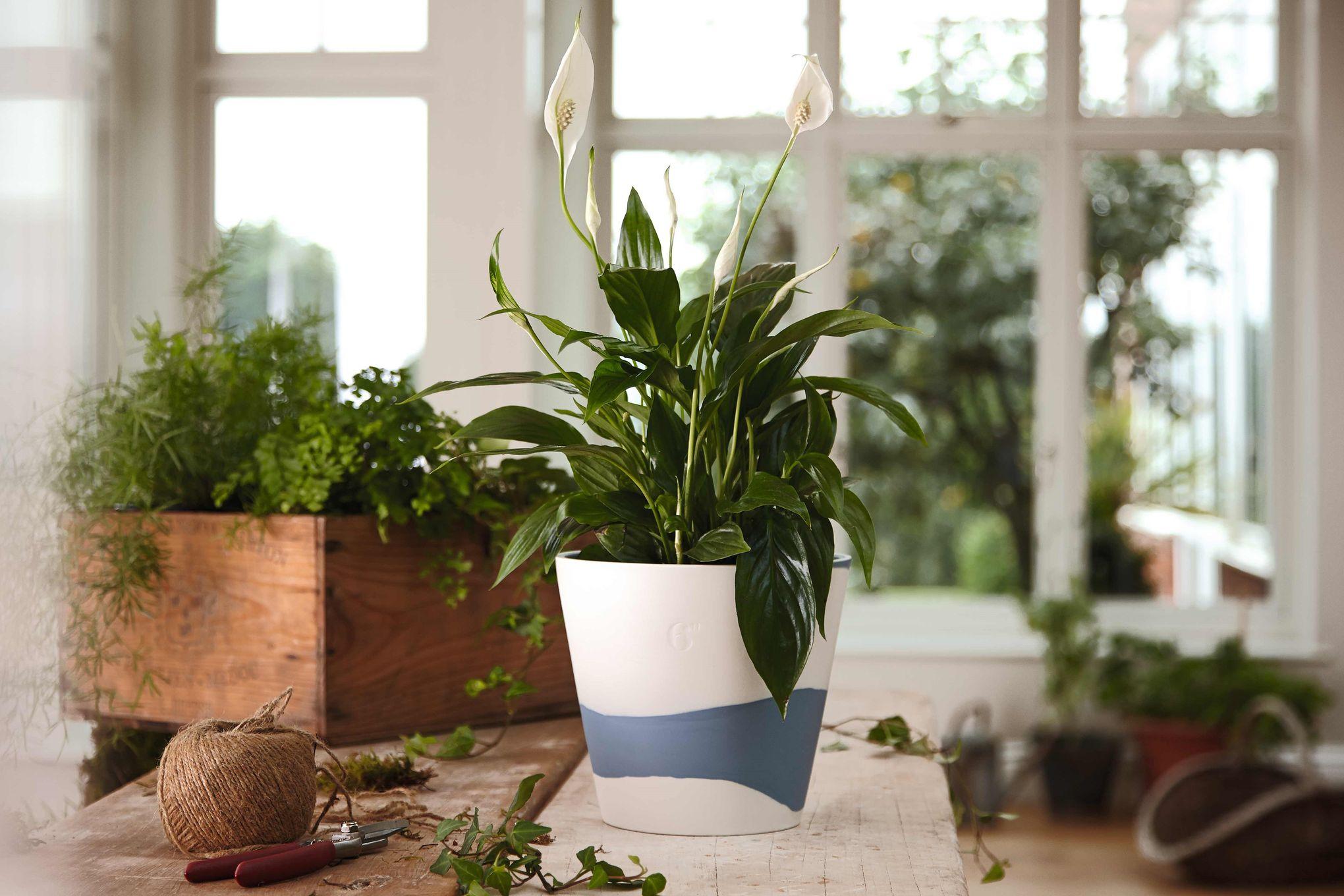 "Wedgwood Burlington Pots Planter Blue 6"" thumb 3"