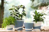 "Wedgwood Burlington Pots Planter Blue 7"" thumb 3"